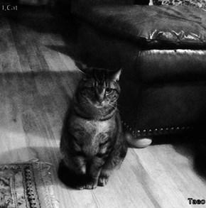 I,Cat  Taeo