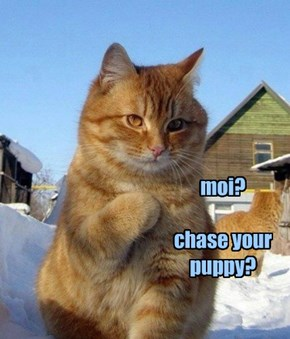 moi?  chase your puppy?