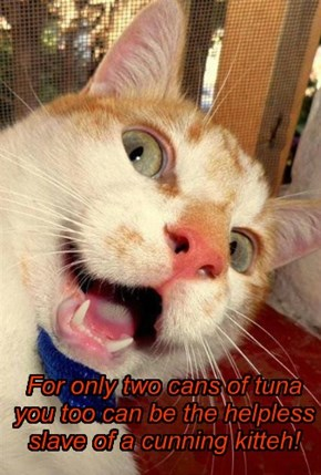 For only two cans of tuna you too can be the helpless slave of a cunning kitteh!