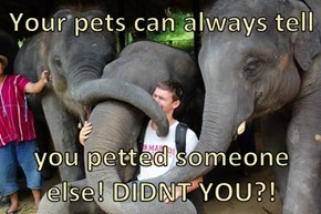 Your pets can always tell  you petted someone else! DIDNT YOU?!