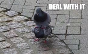 He's My Stool Pigeon