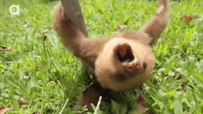 Whoa, Slow Down!  It's Sloth Week!