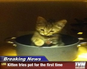 Breaking News - Kitten tries pot for the first time