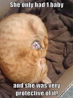 She only had 1 baby  and she was very protective of it!