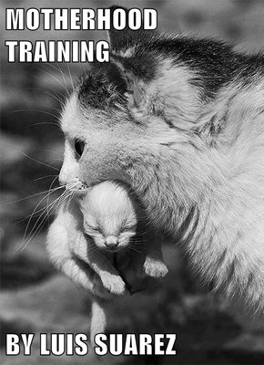 MOTHERHOOD TRAINING  BY LUIS SUAREZ