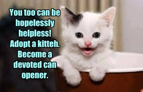 You too can be hopelessly helpless! Adopt a kitteh. Become a devoted can opener.