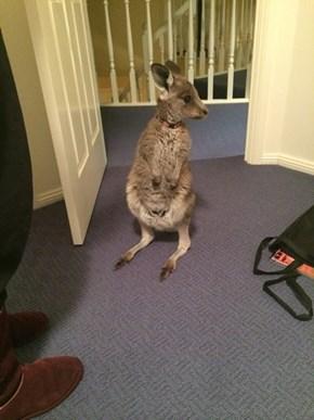 A Hoppy Dinner Guest