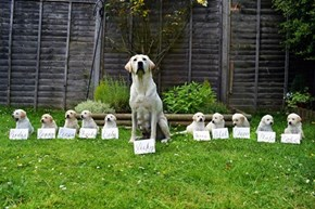 A Family of Future Guide Dogs