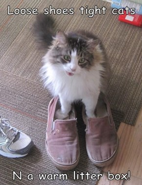 Loose shoes tight cats  N a warm litter box!