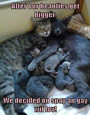 After our beauties get bigger,   We decided on spay an gay wif lov!