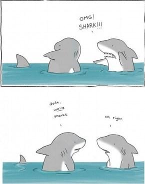 Dude, a Shark!