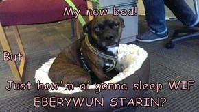 My new bed!  But Just how'm ai gonna sleep WIF EBERYWUN STARIN?