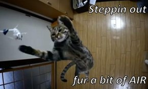Steppin out   fur a bit of AIR