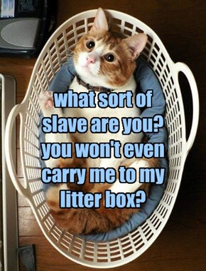 what sort of  slave are you? you won't even carry me to my litter box?