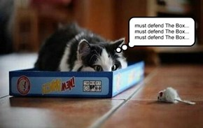 must defend The Box... must defend The Box... must defend The Box...