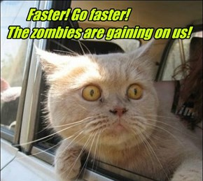 Faster! Go faster!  The zombies are gaining on us!