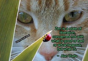 Zen is a state of       liberation,        concerned not with        what is good or bad       or advantageous,       but what IS.