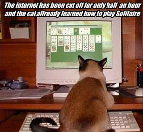 The internet has been cut off for only half  an hour and the cat alfready learned how to play Solitaire