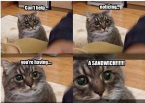 A Tuna Sandwich!
