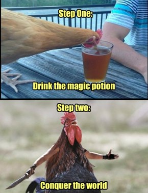 Beer:  It works for chickens, too...