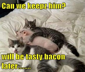 Can we keepz him?  will be tasty bacon later........