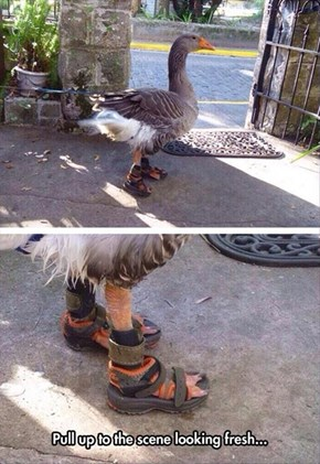 Even Geese Know Not to Wear Socks With Sandals