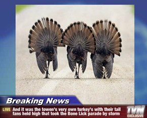 Breaking News - And it was the towen's very own turkey's with their tail fans held high that took the Bone Lick parade by storm