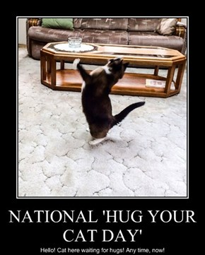 NATIONAL 'HUG YOUR CAT DAY'