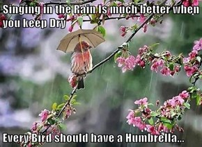 Singing in the Rain Is much better when you keep Dry  Every Bird should have a Humbrella...