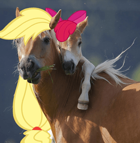 Leaked photo of the upcoming MLP Live Action movie