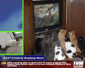 KCAT Celebrity Breaking News - Kitties around the globe are glued to their TV screens as popular KCAT Reporter Hedda Barclaw reports on the much anticipated Wedding of Missy and Punkin.