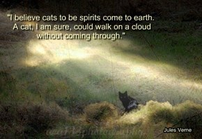"""I believe cats to be spirits come to earth.  A cat, I am sure, could walk on a cloud  without coming through."""