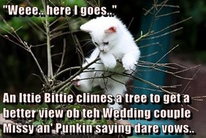 """Weee.. here I goes..""   An Ittie Bittie climes a tree to get a better view ob teh Wedding couple Missy an' Punkin saying dare vows.."