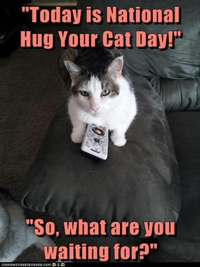 """Today is National Hug Your Cat Day!""  ""So, what are you waiting for?"""