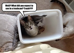 Well? What did you expect to see in a trashcan? Trash???