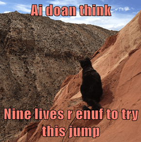 Ai doan think  Nine lives r enuf to try this jump