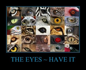 THE EYES ~ HAVE IT