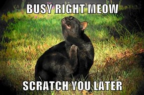BUSY RIGHT MEOW  SCRATCH YOU LATER