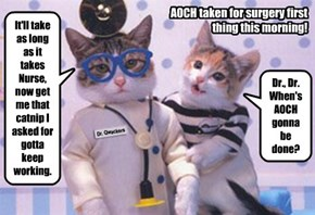 Dr. Qwackers & Nurse OopsaDaisy are confident AOCH's surgery today is going well (as long as the catnip holds out).