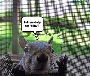 """Did somebody say """"NUTS""""?"""