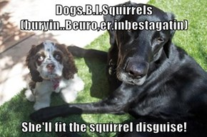 Dogs.B.I.Squirrels(buryin..Beuro,er,inbestagatin)    She'll fit the squirrel disguise!