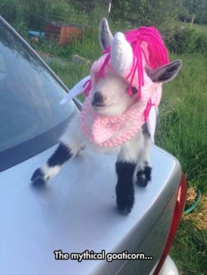 Every Goat Needs a Unicorn Costume