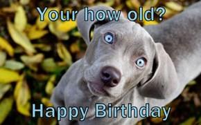 Your how old?  Happy Birthday