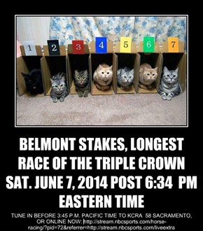 BELMONT STAKES, LONGEST RACE OF THE TRIPLE CROWN SAT. JUNE 7, 2014 POST 6:34  PM EASTERN TIME