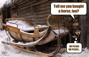 Tell me you bought a horse, too?