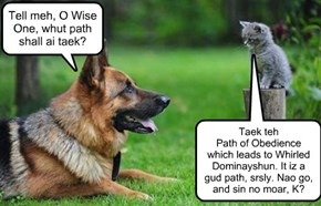Tell meh, O Wise One, whut path shall ai taek?