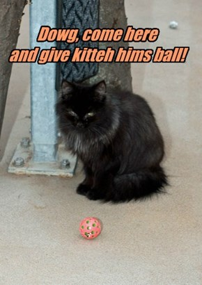 Dowg, come here  and give kitteh hims ball!