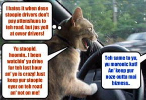 This happens almost every day to kittie on hiz drive into town to teach Driver's Ed at teh local High School..