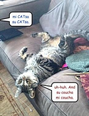 """""""mi CATsa su CATsa"""""""