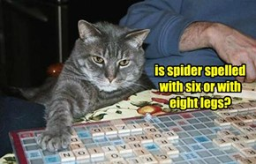 is spider spelled with six or with eight legs?